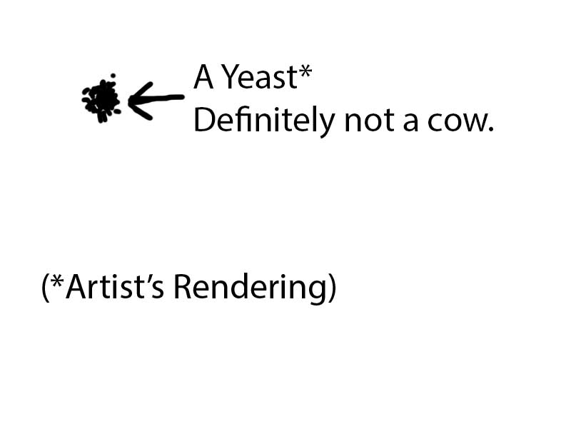 yeast not cow